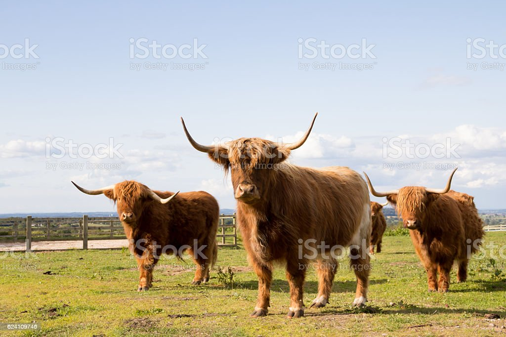 Here come the boys! stock photo