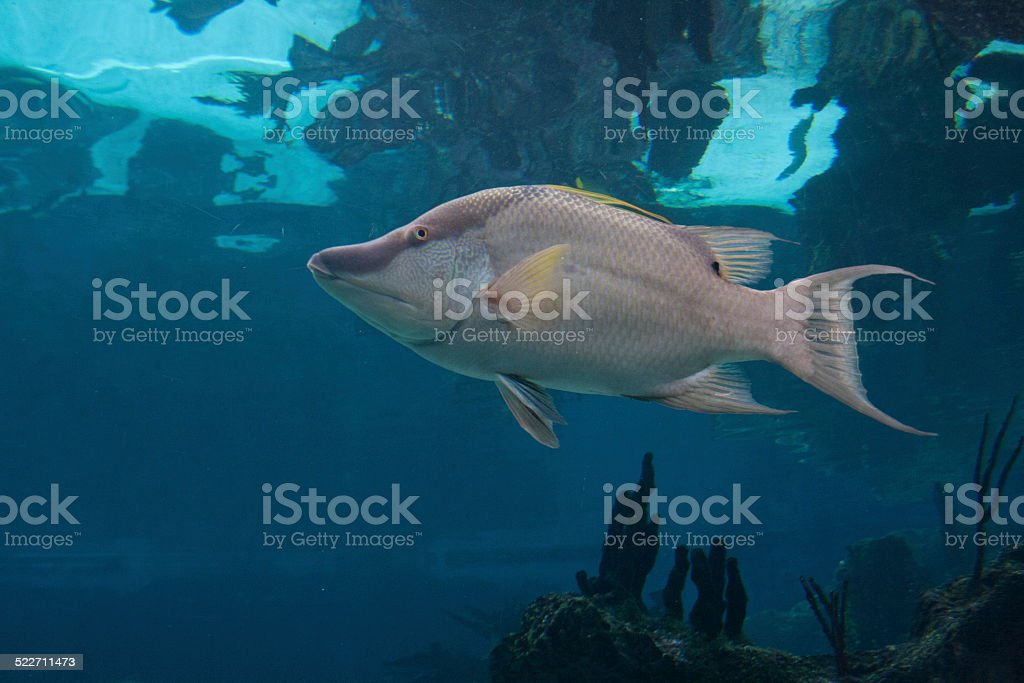 Here Fishy Fishy stock photo