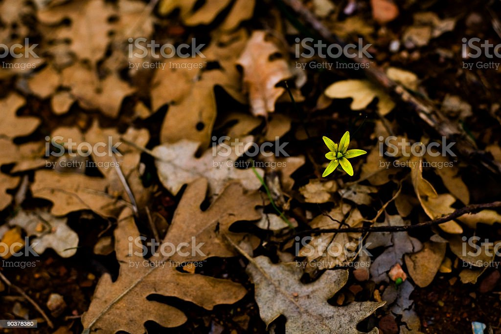 Here's come the spring! stock photo