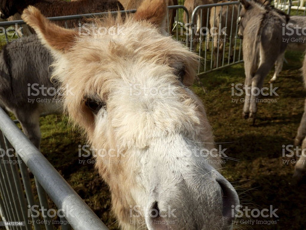 Here's looking at you! royalty-free stock photo
