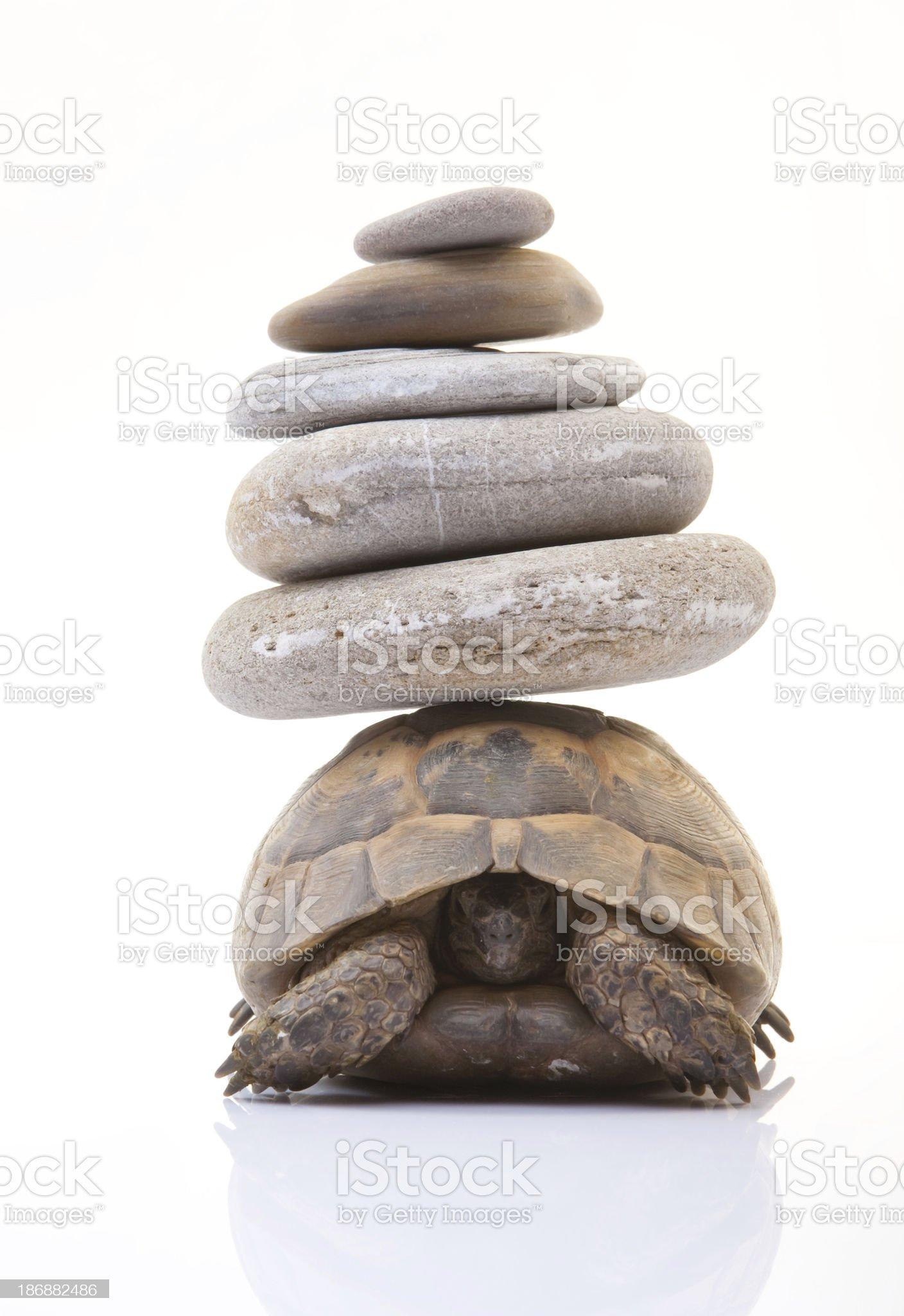Herman's Tortoise royalty-free stock photo