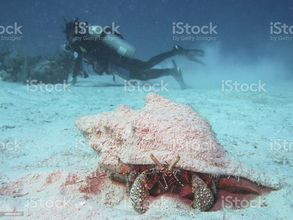 Hermit crab and diver stock photo