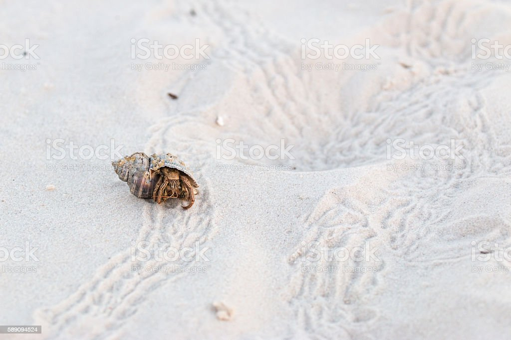 Hermit Crab and many prints on White Sand stock photo