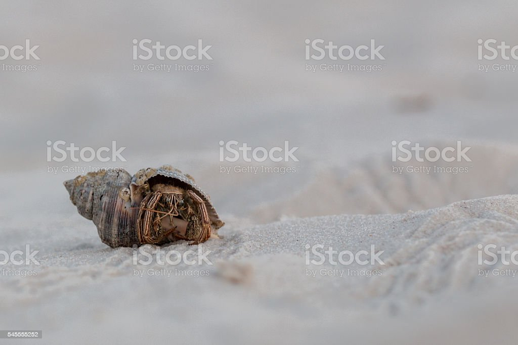 Hermit Crab and shell on top of white sand stock photo