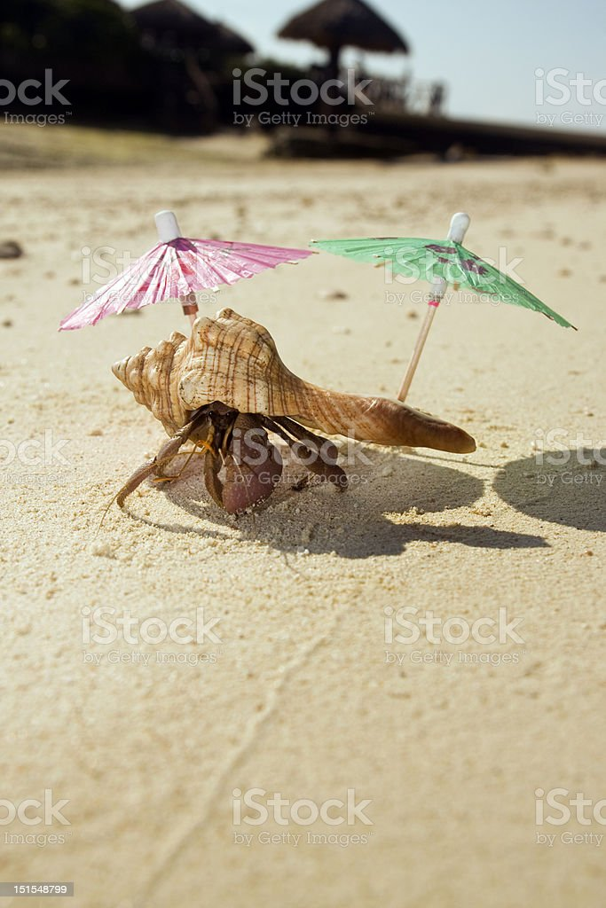 Hermit Crab Beach Bum royalty-free stock photo