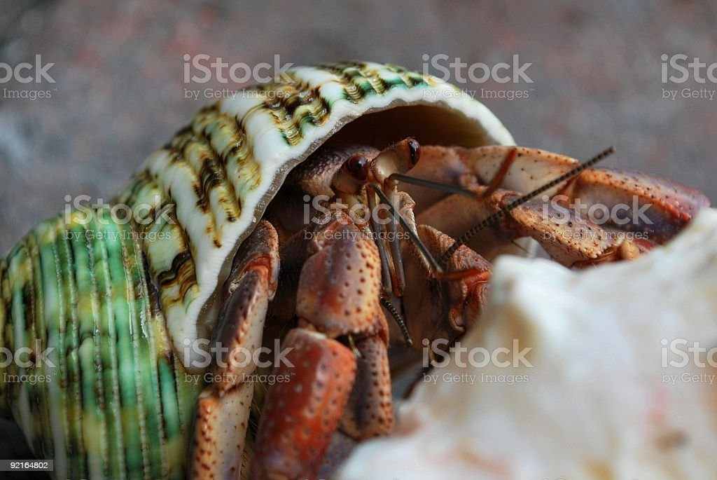 Hermit Crab in Green Shell Peeks Over Sand stock photo