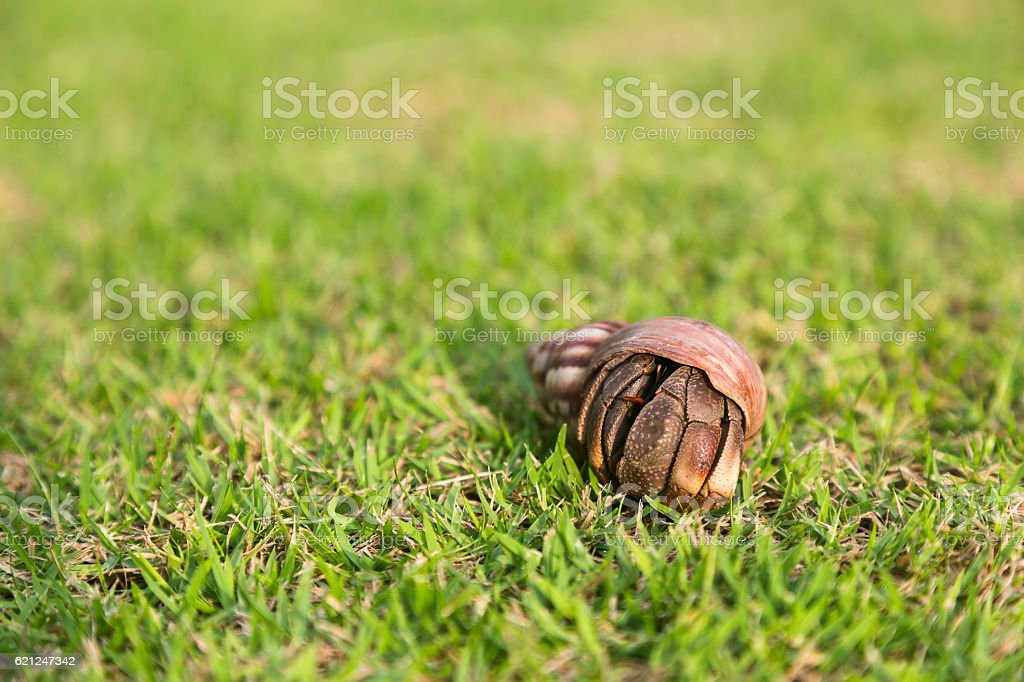 Hermit crab in the grass stock photo
