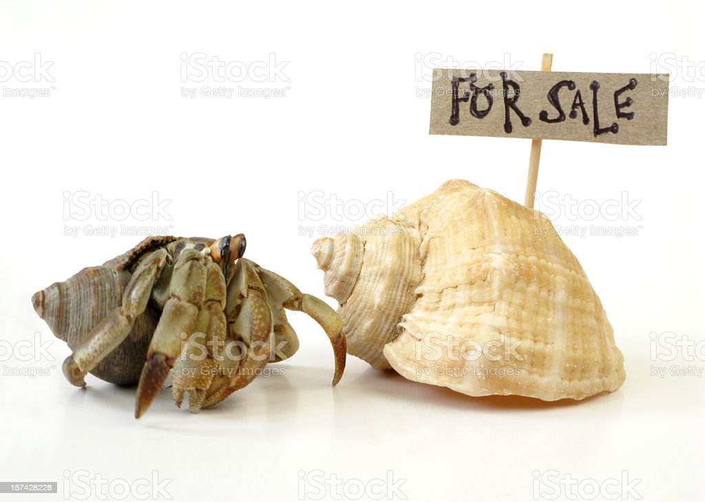 A hermit crab looking for a shell to live in stock photo