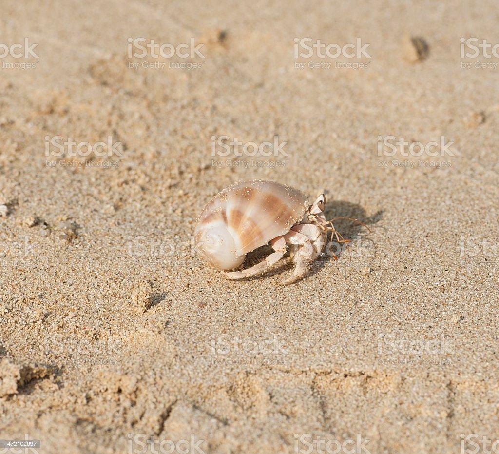 Hermit crab on a beach stock photo