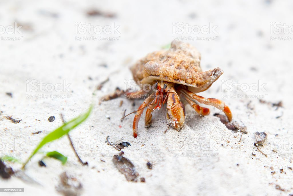 Hermit crab on a tropical beach stock photo