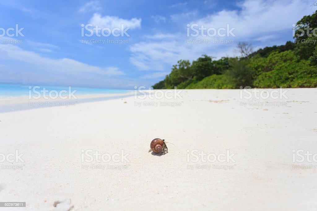 Hermit crab on a white sand beach. stock photo