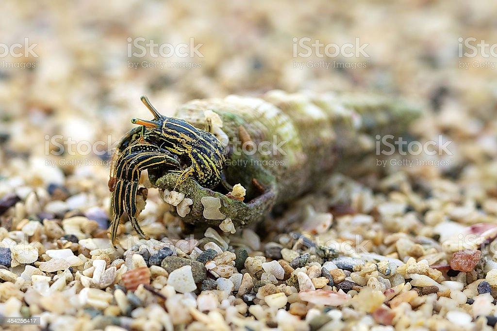 Hermit crab on beach. royalty-free stock photo