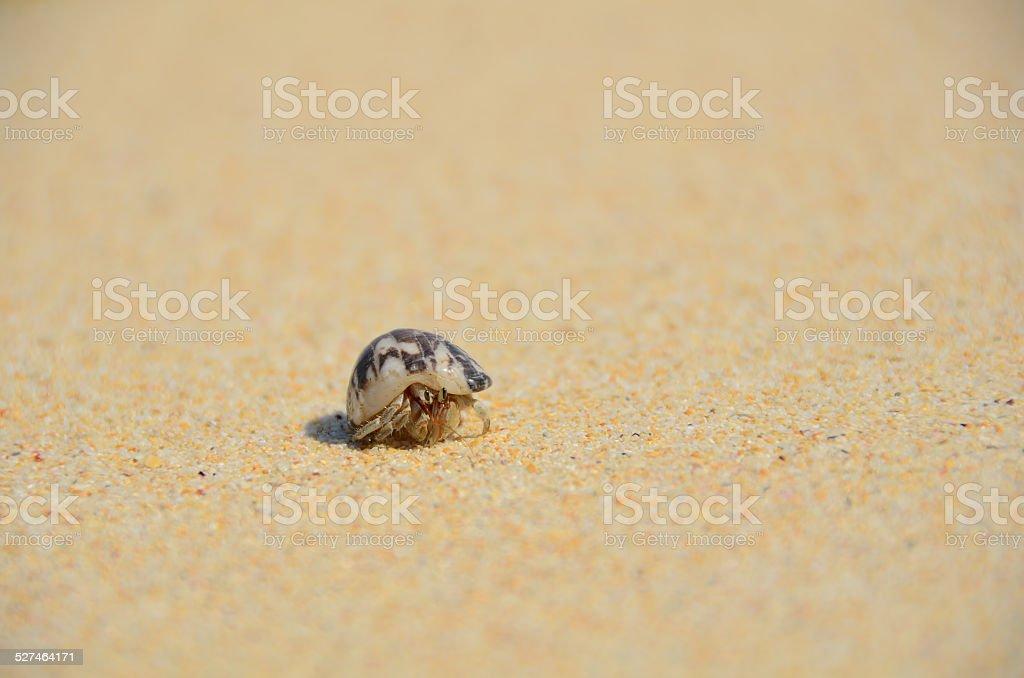 hermit crab on sand stock photo
