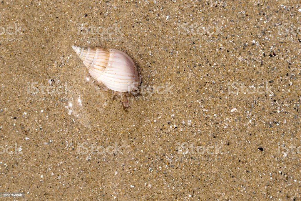 Hermit crab on wet sand stock photo