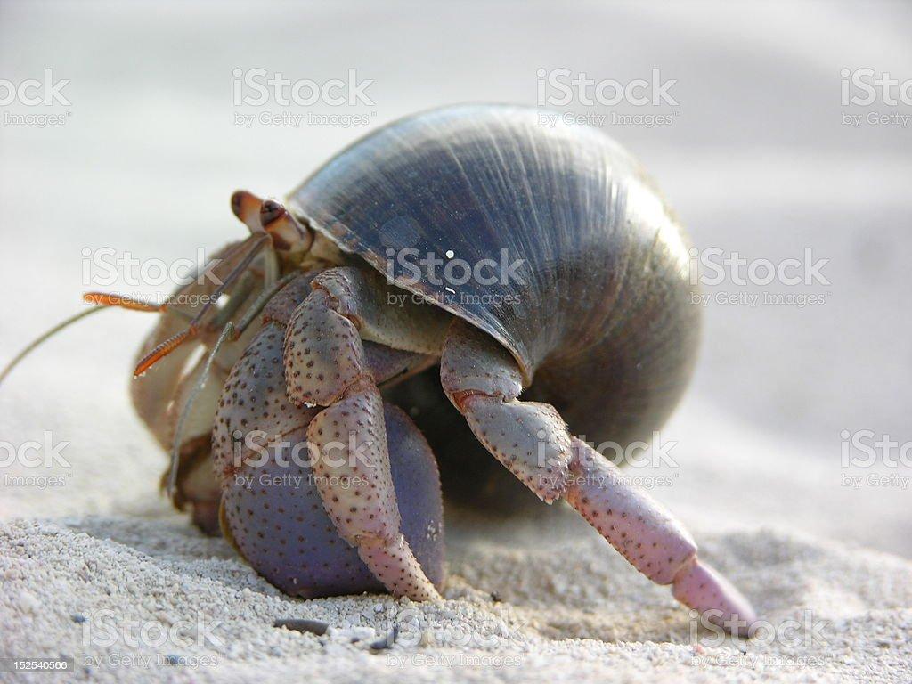 Hermit Crab royalty-free stock photo