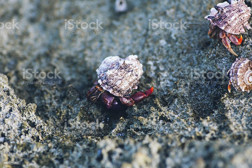 Hermit Crab stock photo