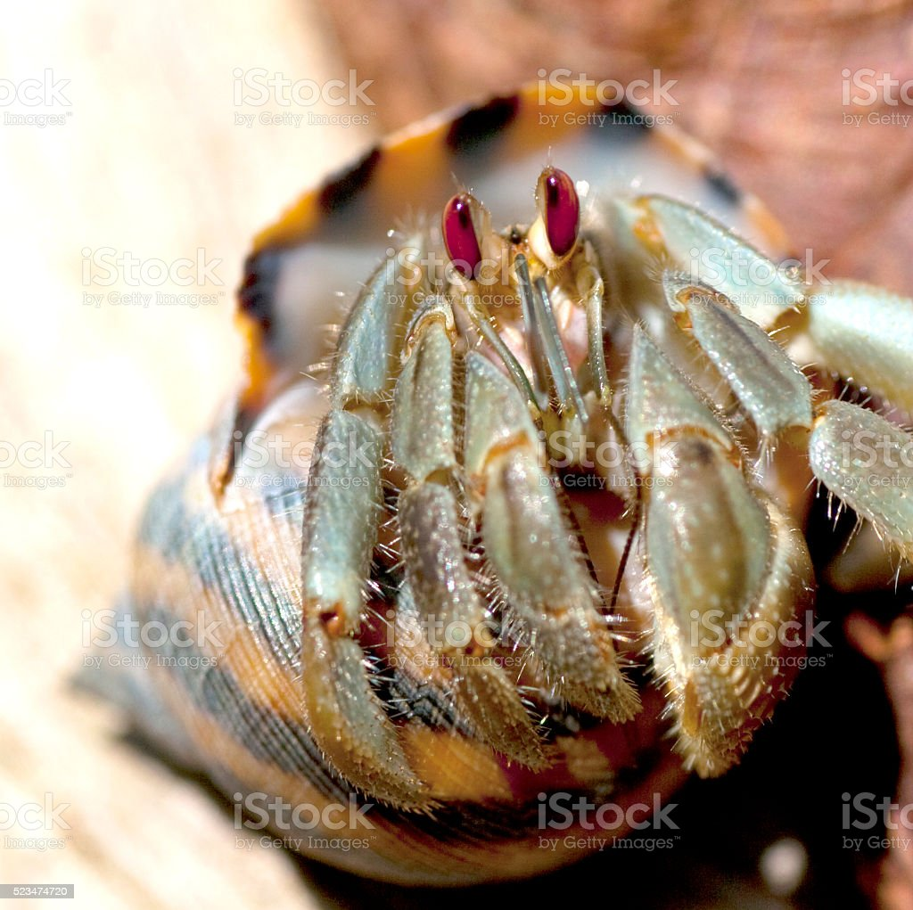 Hermit crab stock photo