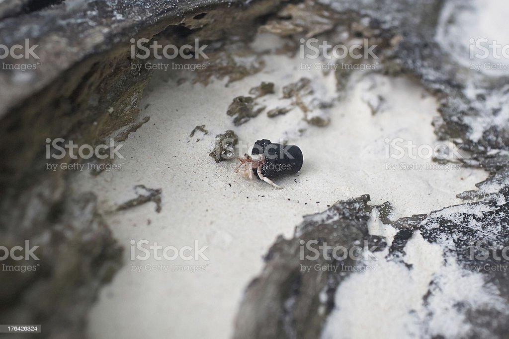 Hermit crab shell with rubber shell. royalty-free stock photo
