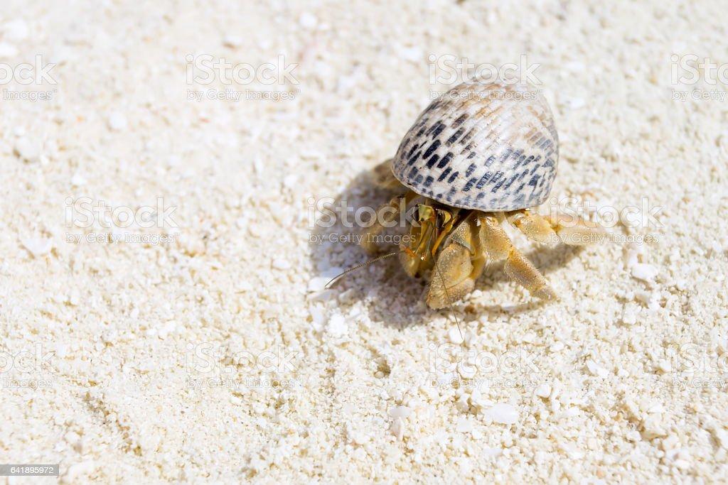 Hermit Crab, Soldier Crab, Diogenes-crab stock photo