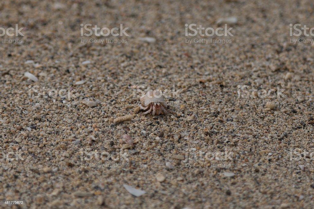 Hermit crab - Stock image stock photo