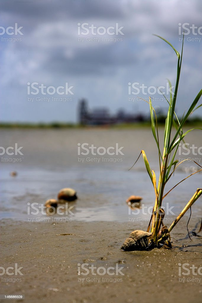 Hermit crabs on the mud flats royalty-free stock photo