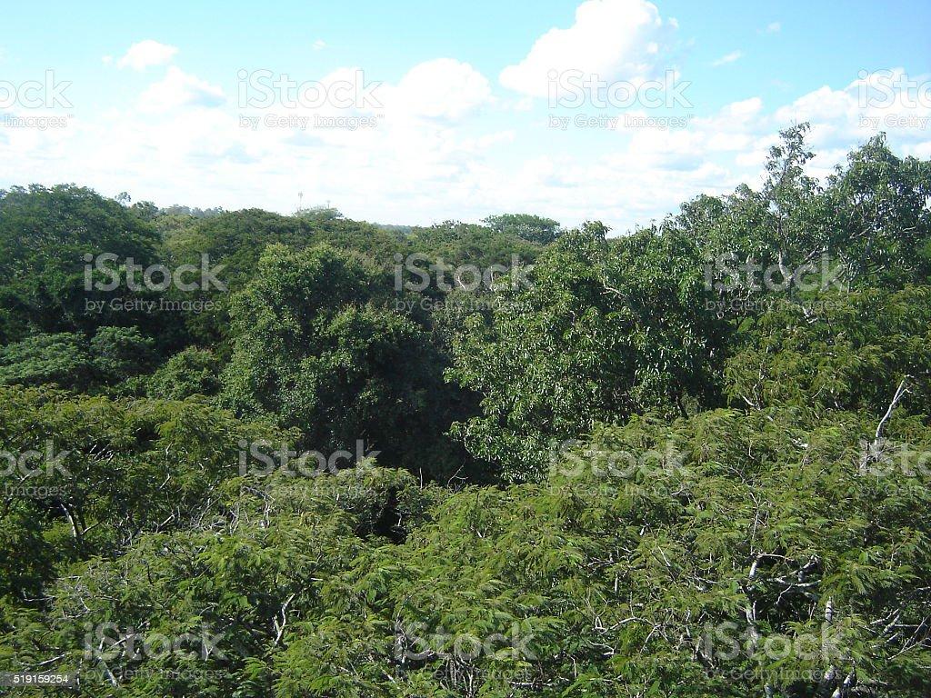 Hermosa vista de mata tropical stock photo