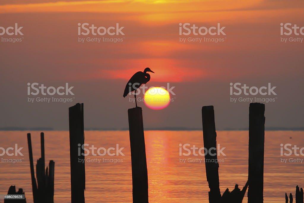 Heron at Sunrise stock photo
