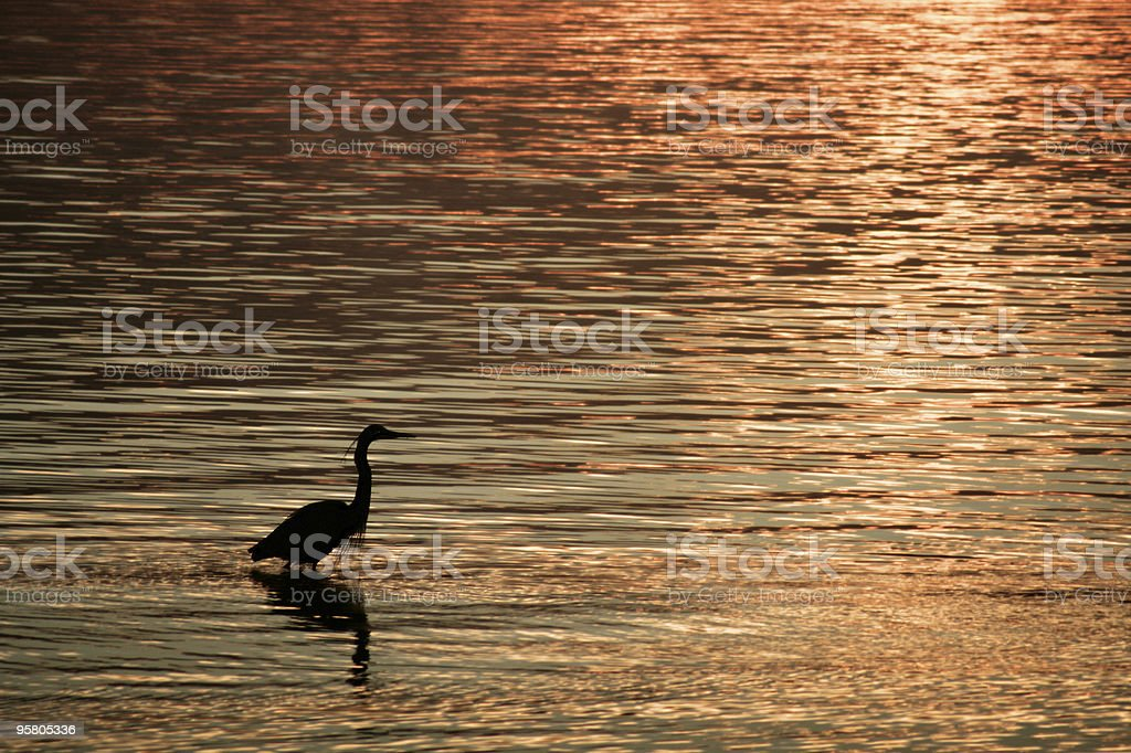 Heron at Sunset stock photo