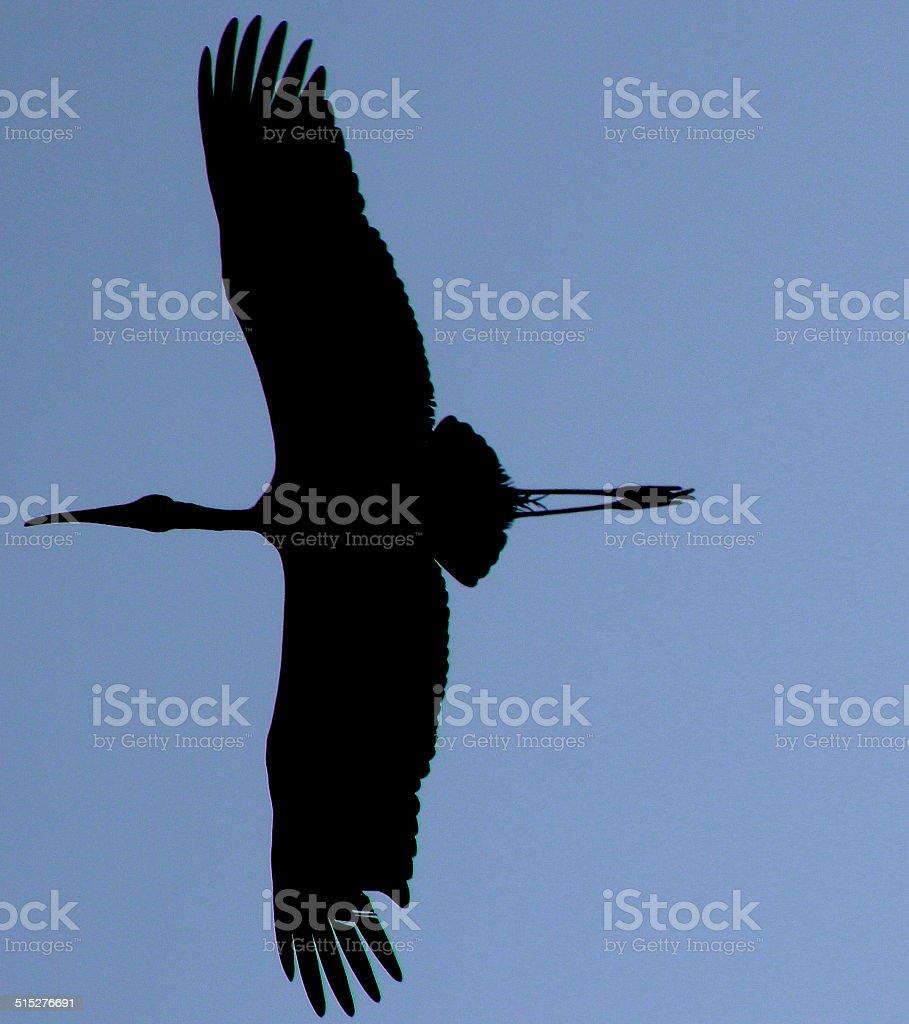 heron bird in flight stock photo