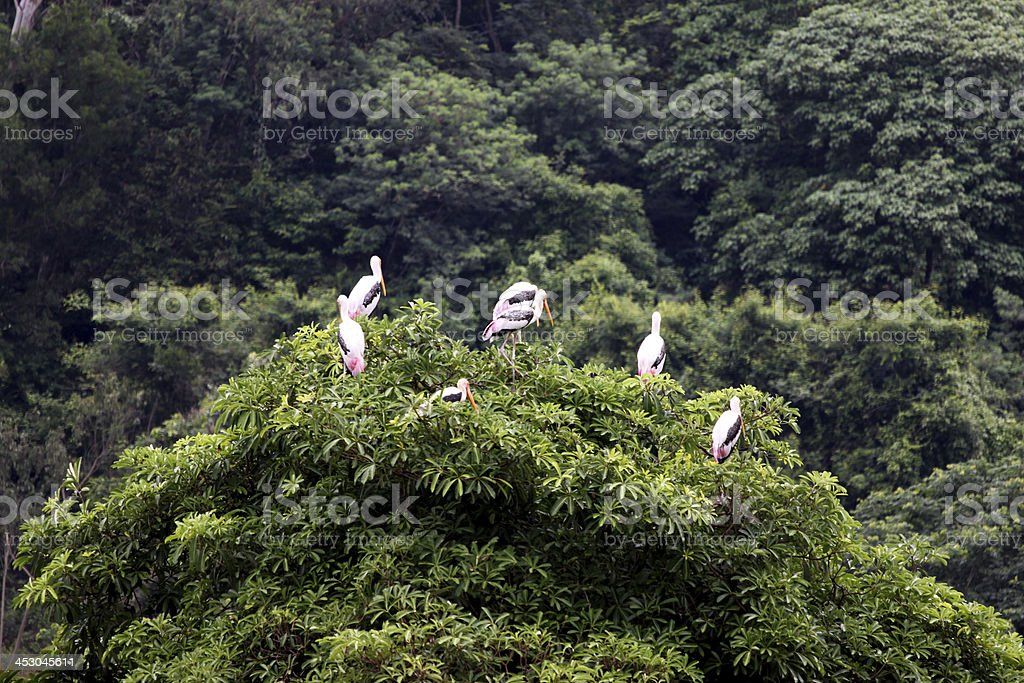 Heron bird perched on a tree. royalty-free stock photo