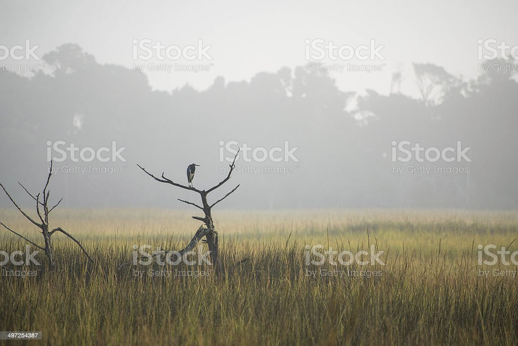 Heron in the Foggy Marsh stock photo