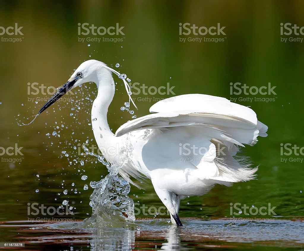 Heron in the water spray stock photo