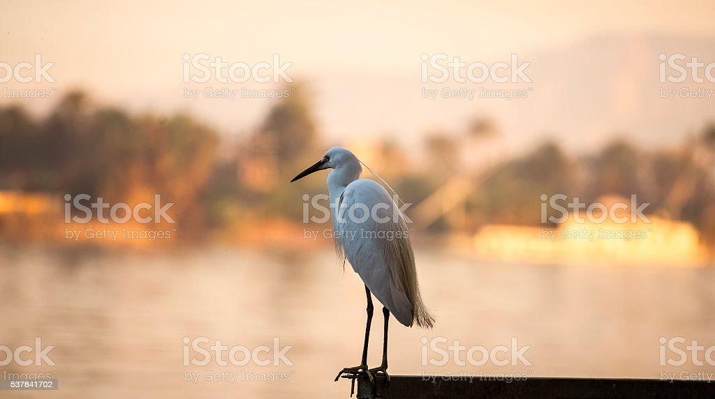 heron landscape white river stock photo