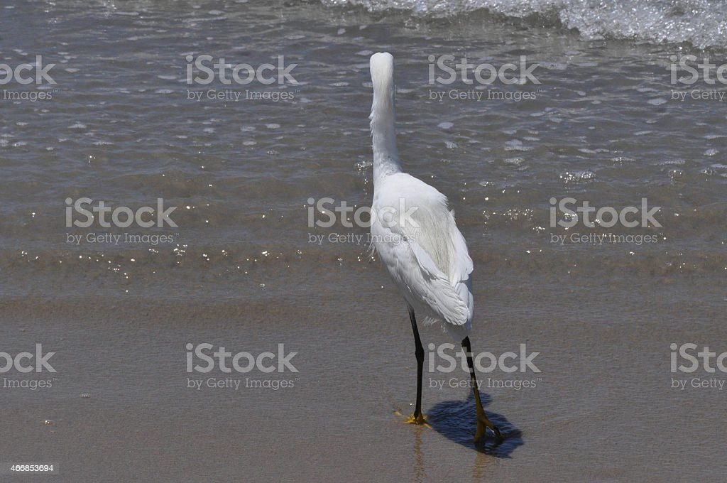 Heron on the foreshore, San Diego stock photo