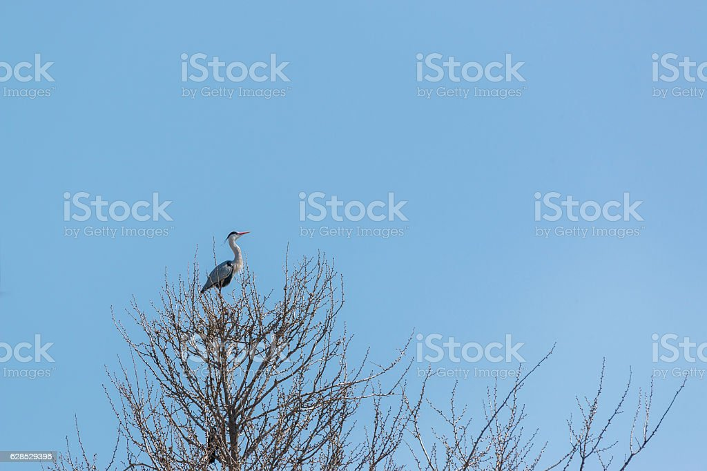 heron or egret on dry tree against blue sky stock photo