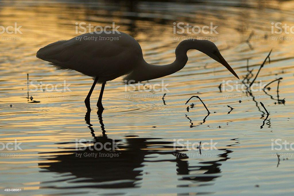 Heron stock photo