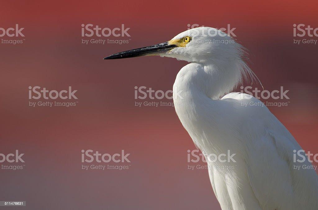 Heron (Garça) stock photo