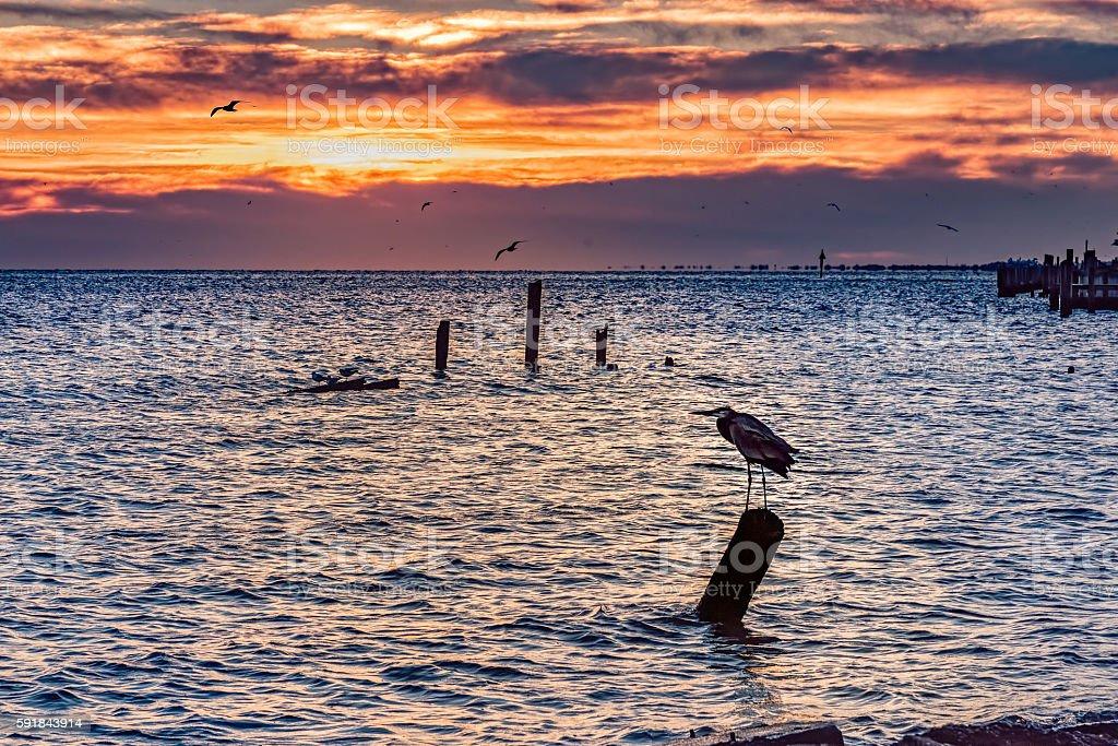 Heron silhouette against sunrise stock photo