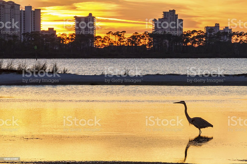 Heron Silhouette and Perdido Key stock photo