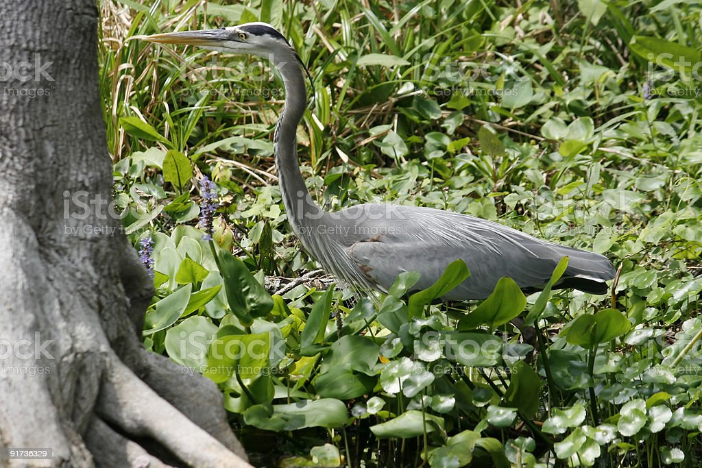 Heron standing near tree stock photo