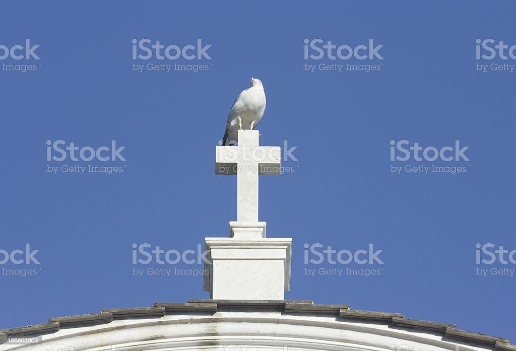 Herring Gull in Liguria, Italy royalty-free stock photo