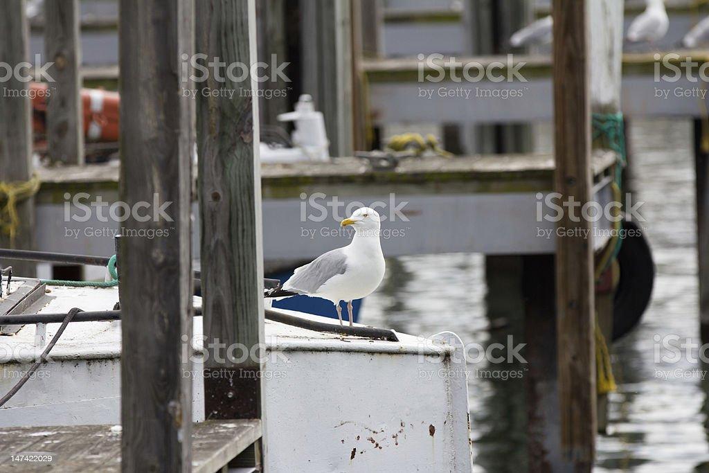 Herring Gull Sitting on Fishing Boat stock photo