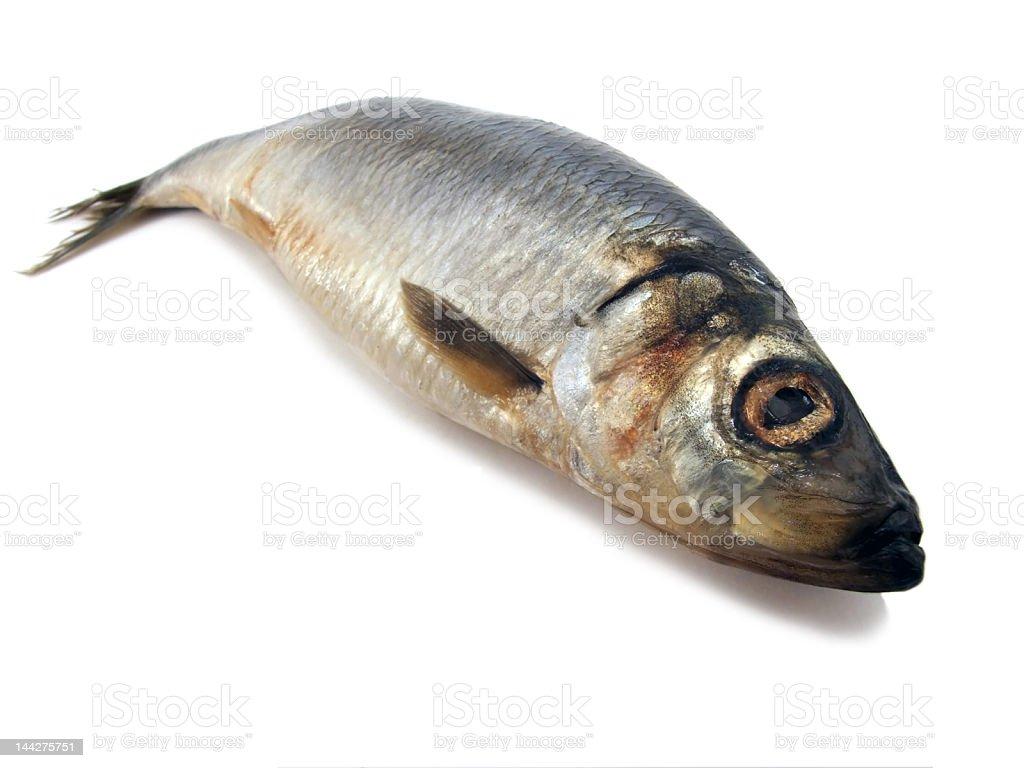 herring royalty-free stock photo