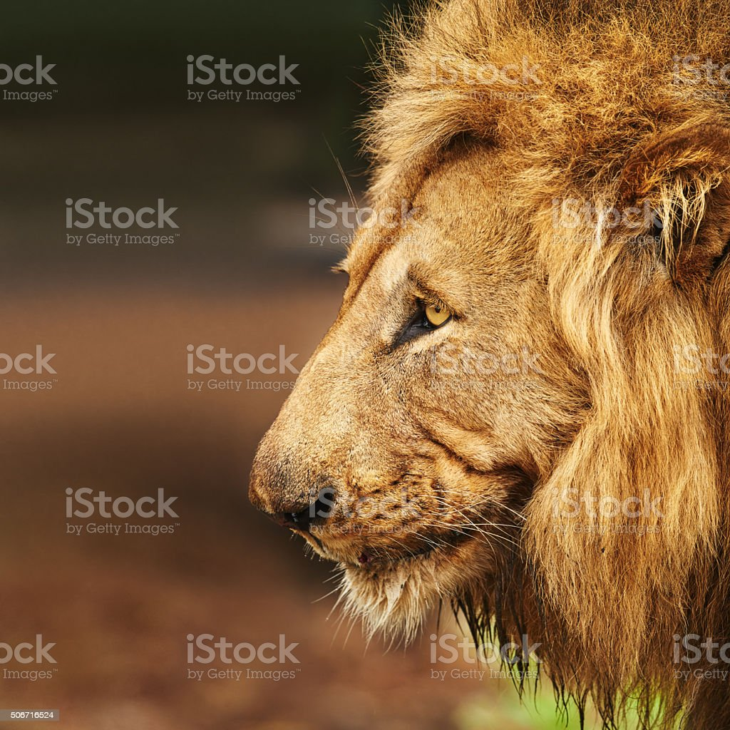 He's a king with a lot of pride stock photo