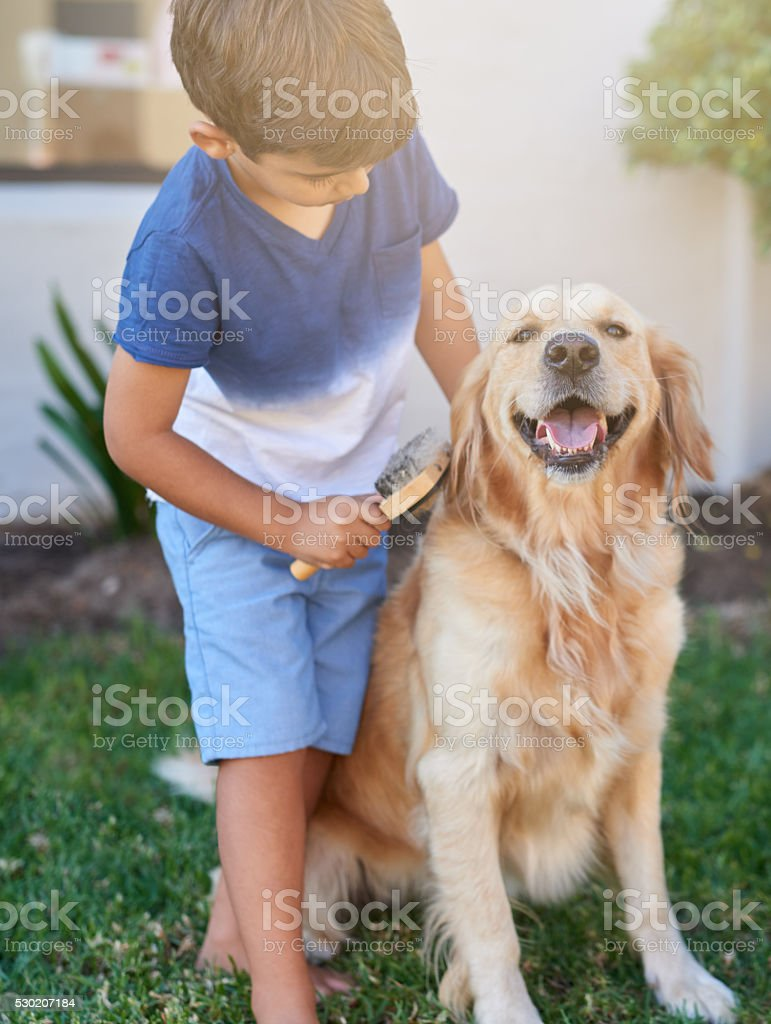 He's having a good fur day stock photo