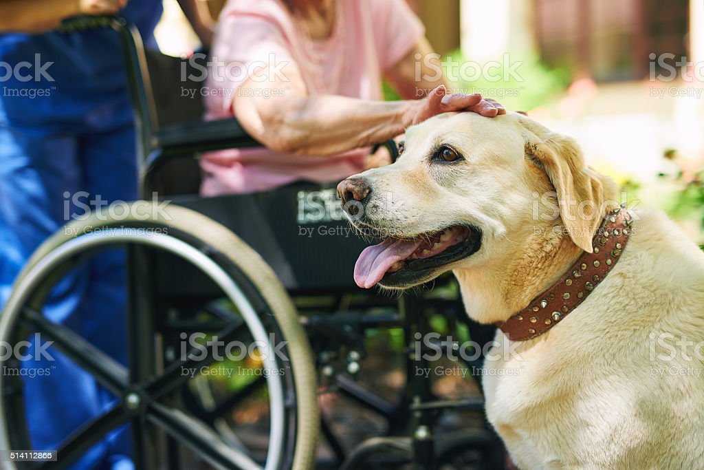 He's not only man's best friend stock photo