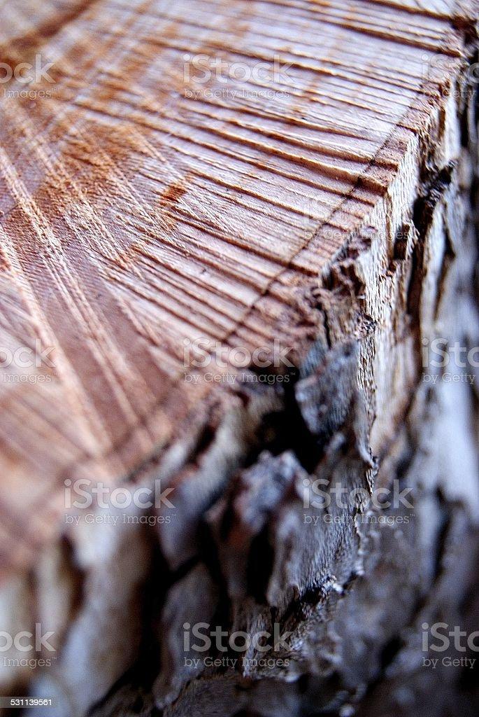 Hewn Cottonwood Stump royalty-free stock photo
