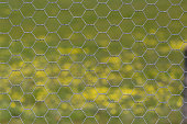 Hexagonal Chicken Wire fence pattern with spring flowers