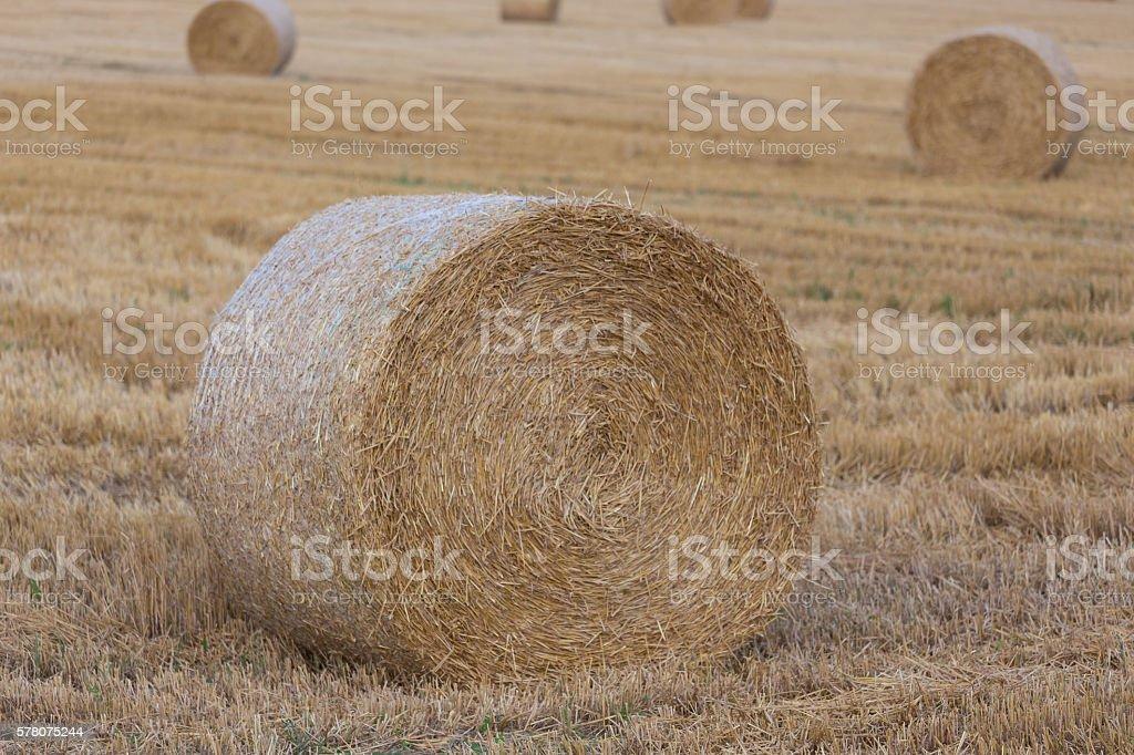 hey bale wheat field stock photo