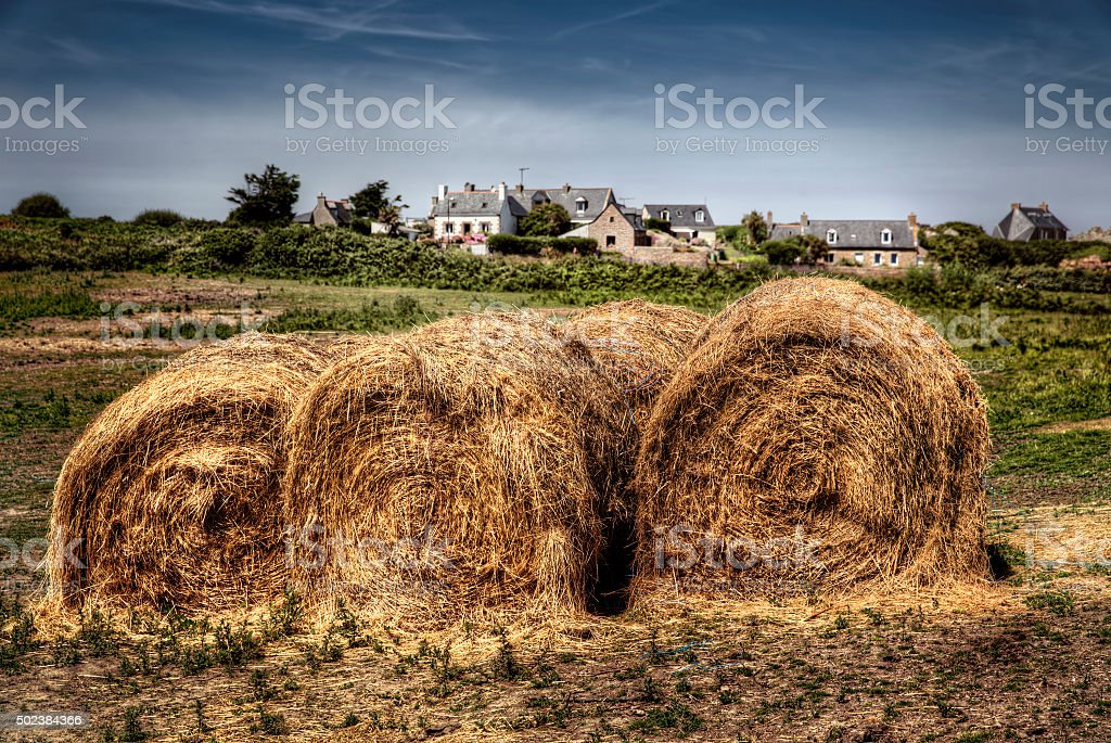 Hey Bales on the Island of Brehat stock photo